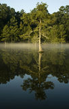 Cypress, river and mist Royalty Free Stock Photography