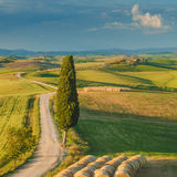 Cypress on the road in the middle of the Tuscan countryside. In summer day Stock Photo