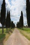 Cypress road Tuscany Royalty Free Stock Photography