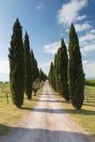 Cypress road Tuscany Stock Photography