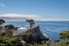 The cypress on the rock Royalty Free Stock Images