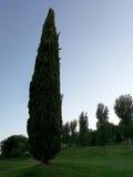 Cypress rodeó por el verdor Imágenes de archivo libres de regalías
