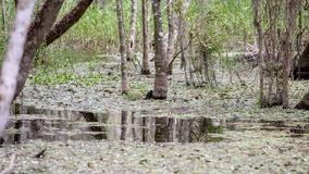 Cypress Roots, Swamp, Big Cypress National Preserve, Florida Stock Photo