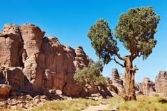 Cypress sahariano, Tassili N'Ajjer, Argelia Foto de archivo libre de regalías