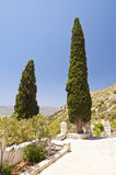 Cypress on Samos Royalty Free Stock Images
