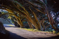 Cypress shade. In Point Reyes Lighthouse, Inverness, United States stock photos