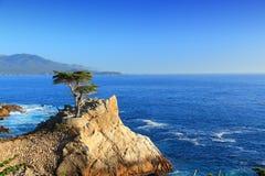 Cypress solitário, Califórnia Fotos de Stock Royalty Free