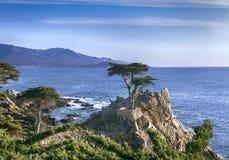 Cypress solitário - movimentação de 17 milhas imagem de stock