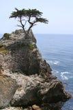 Cypress solitário na movimentação 17-Mile fotografia de stock royalty free