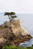 Cypress solitário, Pebble Beach, Califórnia Fotos de Stock Royalty Free