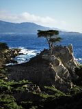 Cypress solitaire chez Pebble Beach en Californie Image stock