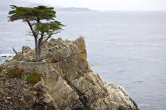 Cypress solitario Fotografía de archivo