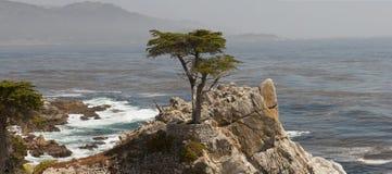 Cypress solitario California Fotografía de archivo libre de regalías