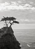 Cypress solitario en mecanismo impulsor de 17 millas Imagen de archivo libre de regalías