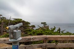 Cypress solitario en Monterey imagen de archivo libre de regalías