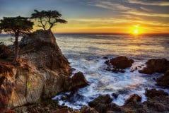Cypress solitario los E.E.U.U. imagen de archivo