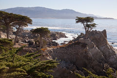 Cypress solitário, Carmel, Califórnia Foto de Stock
