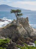 Cypress solo Immagini Stock