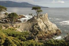 Cypress solo, Carmel, CA Fotografia Stock Libera da Diritti