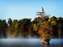 Cypress solo ed airone blu Fotografia Stock Libera da Diritti