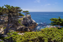 Cypress solo, Pebble Beach immagini stock