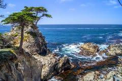 Cypress solo, Pebble Beach fotografia stock libera da diritti