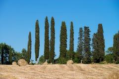 Cypress su un campo con le balle di paglia in Italia Fotografia Stock