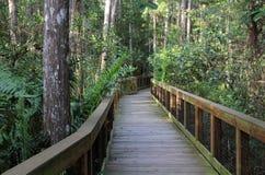 Cypress Swamp fotografering för bildbyråer