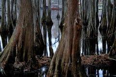 Cypress Swamp. Beautiful Cypress Swamp at Lake Caddo in East Texas Royalty Free Stock Image