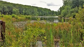 Free Cypress Swamp At NC Zoo Royalty Free Stock Photography - 115817857