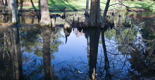 Cypress Swamp Reflection in South Carolina, USA. Cypress swamp reflection located Sumter, South Carolina, USA stock images