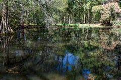 Cypress Swamp in South Carolina, USA. Cypress swamp landscape located Sumter, South Carolina, USA Stock Photo