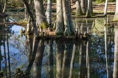 Cypress Swamp in South Carolina, USA. Cypress swamp landscape located Sumter, South Carolina, USA Stock Image