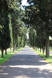 Cypress tree alley Stock Photography