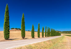 Cypress tree alley in Tuscany. With blue sky and farm at horirzon Royalty Free Stock Image