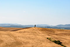 A cypress tree at alone at the top of a hill. A cypress tree alone at the top of a hill in the countryside of Siena, Tuscany, Italy royalty free stock photos