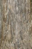 Cypress Tree Background. A texture background of a cypress tree trunk stock image