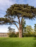 Cypress tree. Blaise Castle Estate - notable cypress tree by the Dairy next to the Orangery.Blaise Castle near Henbury is in an historic estate with ancient royalty free stock photography