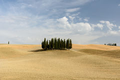 Cypress tree circle in the middle of a field in Val d'Orcia, Tus. Cany in summer royalty free stock photos