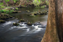 Cypress Tree, Hillsborough River. The scenic Hillsborough River winds through a subtropical landscape, Hillsborough River State Park, Southwest Florida Royalty Free Stock Photo