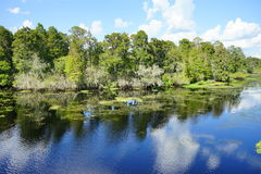 Cypress tree in a lake Stock Photos