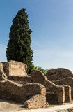 Cypress Tree Over Old Stone Wall in Pompeii Royalty Free Stock Image