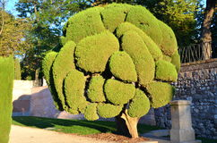 Cypress tree in Retiro Park in Madrid, Spain Stock Photos