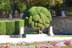 Cypress tree in Retiro Park in Madrid, Spain Royalty Free Stock Photo