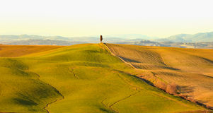 Cypress tree and rolling hills rural landscape in Crete Senesi, Tuscany. Italy Royalty Free Stock Photos
