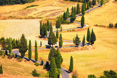 Cypress tree scenic road in Monticchiello near Siena, Tuscany, I Stock Image