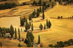 Cypress tree scenic road in Monticchiello near Siena, Tuscany, I Stock Photos