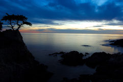 Cypress Tree at Sunset. Cypress Tree Along Rugged California Coast stock images