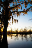 Cypress tree at sunset. A cypress tree at sunset in Louisiana, America stock photos