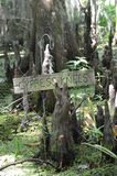 Cypress tree and Tillandsia usneoides in Barataria Preserve  swamp New Orlean Louisiana Royalty Free Stock Images